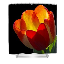 Tippy Shower Curtain by Doug Norkum