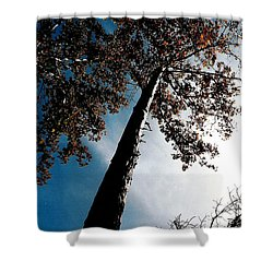Shower Curtain featuring the photograph Tippy Top Tree Photo by Lesa Fine