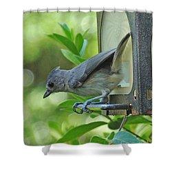Shower Curtain featuring the photograph Titmouse by Lizi Beard-Ward