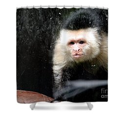 Tito In Window Shower Curtain by Ed Weidman