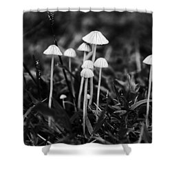 Toadstools V3 Shower Curtain by Douglas Barnard