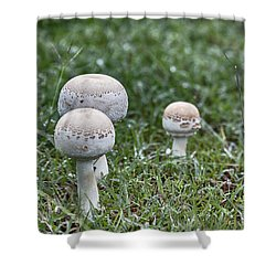 Toadstools V9 Shower Curtain by Douglas Barnard