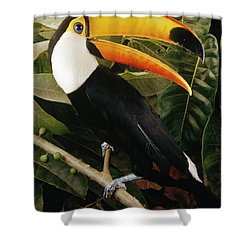 Toco Toucan Ramphastos Toco Calling Shower Curtain by Claus Meyer