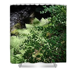 Tod Creek  Shower Curtain