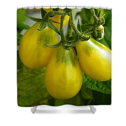 Tomato Triptych Shower Curtain by Brian Boyle
