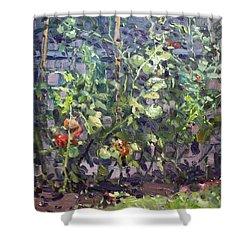 Tomatoes In Viola's Garden  Shower Curtain