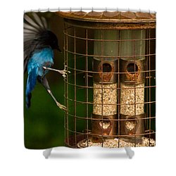 Too Small For A Stellar Jay Shower Curtain by Eti Reid