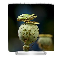 Topper Shower Curtain by Jean Noren