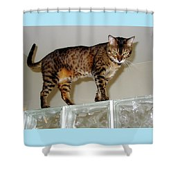 Shower Curtain featuring the photograph Tora On Glass II by Phyllis Kaltenbach