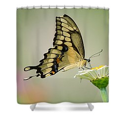 Torn Beauty Shower Curtain