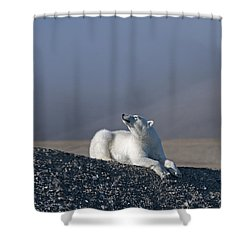 Total Bliss.. Shower Curtain