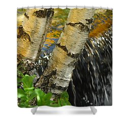 Totally Birching Shower Curtain