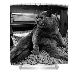 Shower Curtain featuring the photograph Totally Relaxed by Laura Melis