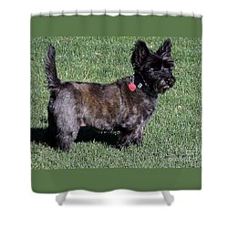 Toto's Sister Sweetpee Shower Curtain by Jay Milo