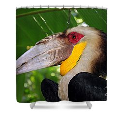 Toucan Shower Curtain by Sergey Lukashin