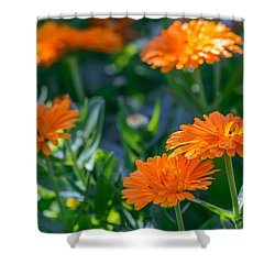 Touch By Light Shower Curtain
