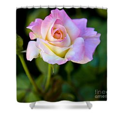 Shower Curtain featuring the photograph Rose-touch Me Softly by David Millenheft