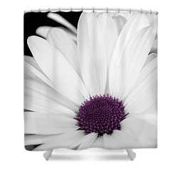 Touch Of Purple Shower Curtain by Xenia Headley