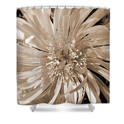 Touched By Light Shower Curtain by Leana De Villiers