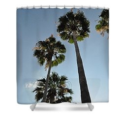 Shower Curtain featuring the photograph Towering Palms by John Black