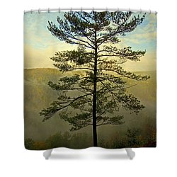 Shower Curtain featuring the photograph Towering Pine by Suzanne Stout