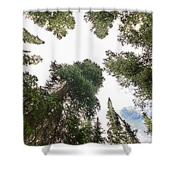 Towering Pine Trees Shower Curtain by James BO  Insogna