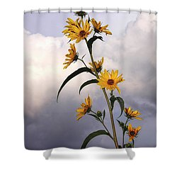Shower Curtain featuring the photograph Towering Sunflowers by Rob Graham