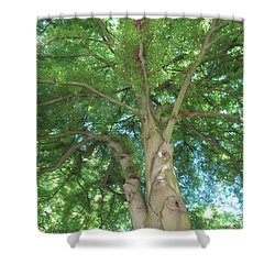Shower Curtain featuring the photograph Towering Tree by Pema Hou