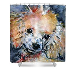 Toy Poodle Shower Curtain by John D Benson