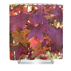 Shower Curtain featuring the photograph Traces Of Fall by Andrea Anderegg