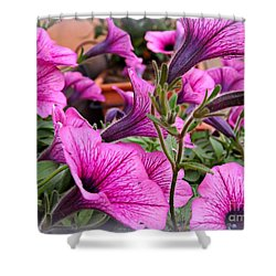 Trailing Petunias Shower Curtain by Clare Bevan
