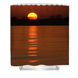 Trailing Sun Shower Curtain by Karol Livote