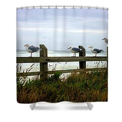 Trained Gulls Shower Curtain by John  Greaves