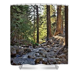 Tranquil Forest Shower Curtain by Peggy Hughes