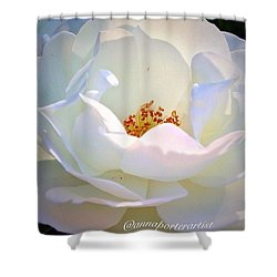 Transcendence White Rose Shower Curtain
