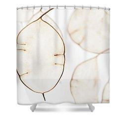 Translucent Shower Curtain by Anne Gilbert