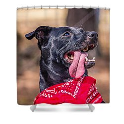 Shower Curtain featuring the photograph Treat Please by Rob Sellers