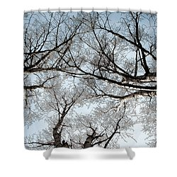 Tree 2 Shower Curtain