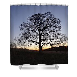 Tree At Dawn Shower Curtain by Michael Porchik