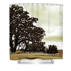Tree At End Of Runway Shower Curtain