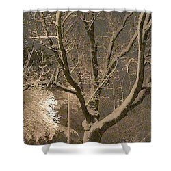 Tree At Night Shower Curtain
