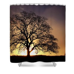 Tree At Sunrise In The Fog Shower Curtain