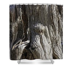 Shower Curtain featuring the photograph Tree Bark No. 3 by Lynn Palmer