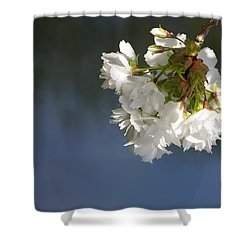 Shower Curtain featuring the photograph Tree Blossoms by Marilyn Wilson