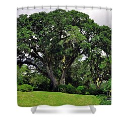 Tree By The River Shower Curtain by Lydia Holly