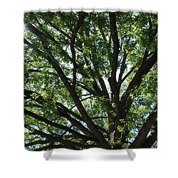 Tree Canopy Sunburst Shower Curtain