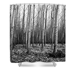 Tree Farm Shower Curtain by Chalet Roome-Rigdon