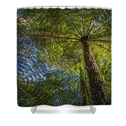 Tree Ferns From Below Shower Curtain