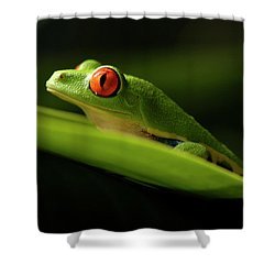 Tree Frog 7 Shower Curtain by Bob Christopher