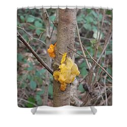 Tree Fungus Shower Curtain by John Williams